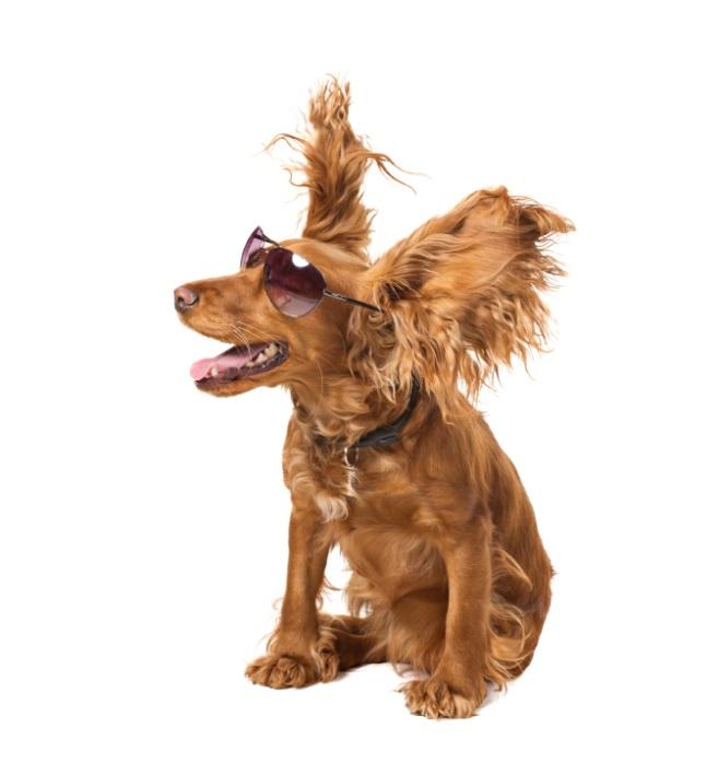 fan cooled dog