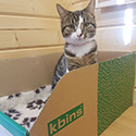 Cool cats love K-bins