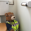 Health & Safety Bear Says... Office Antics