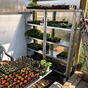 Shelving for seedlings
