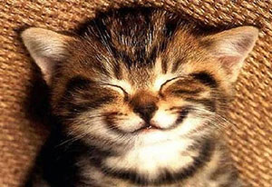 Sophia supplied this picture of a very happy cat. And why not?!