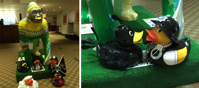 Ducks congregate at Holiday Inn Norwich North
