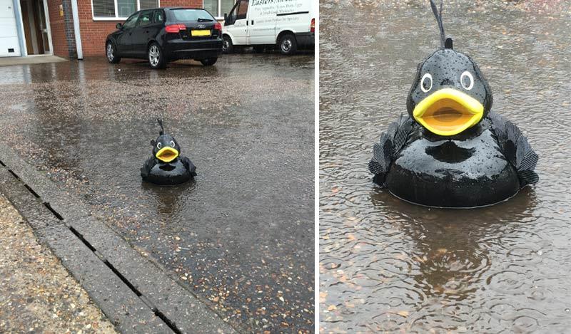 Mat enjoys the Summer rain