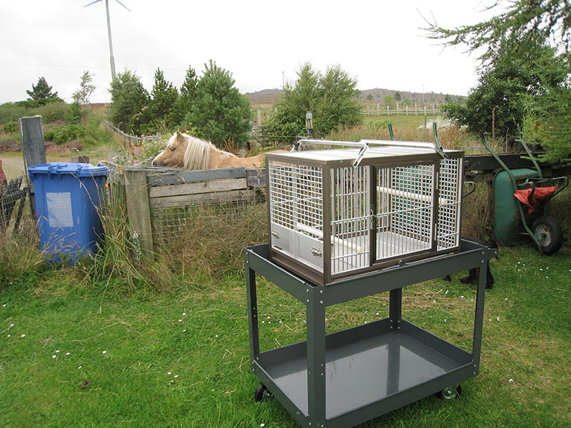 Parrot cage on a workshop trolley