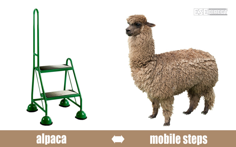 An alpaca wonders why the mobile steps aren't furry