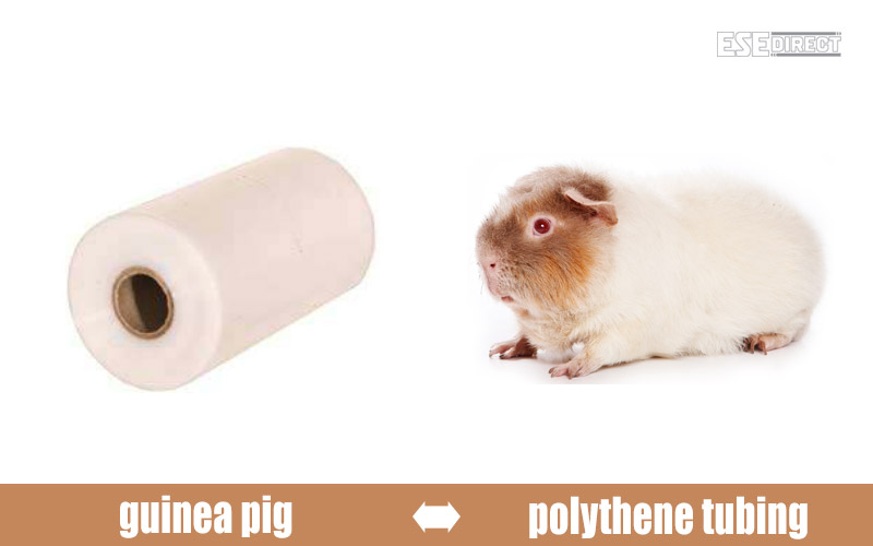 A roll of polythene tubing disguised as a guinea pig