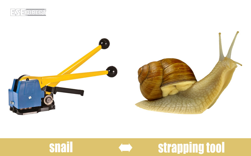 A strapping tool modelled on the grape snail
