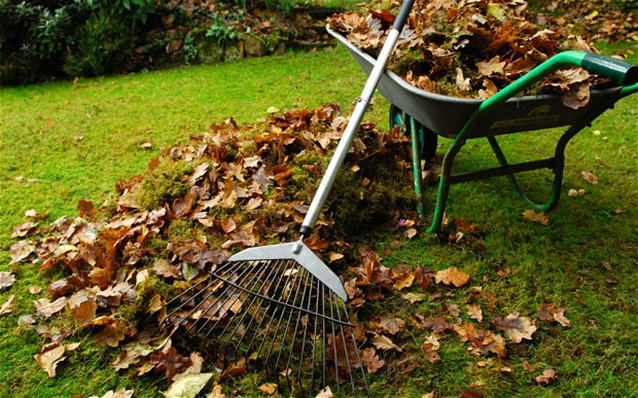 Garden leaves, wheelbarrow and rake